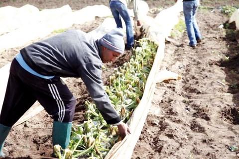 pluies agriculteurs maroc