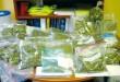 Légalisation du Cannabis : et les autres pays ?