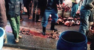 Dossier : Les viandes contaminées à l'ammoniac ?