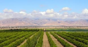 Agriculture : Tout dépend du ciel, mais…