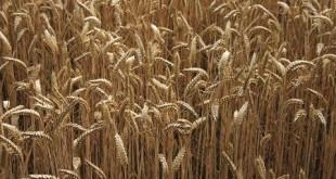 Bonnes perspectives pour la campagne agricole marocaine 2014-2015