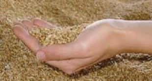 Agriculture : Le prix référentiel du blé fixé