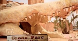 Agadir : 300 crocodiles lâchés