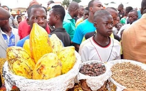 Caravane cacao cote d ivoire