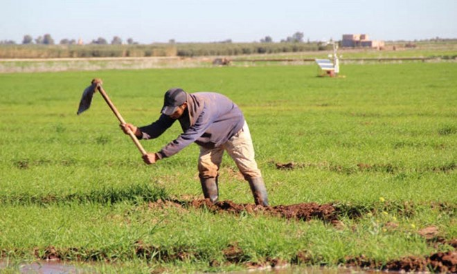 Campagne agricole 2015-2016 : Le programme qui anticipait la sécheresse au Maroc