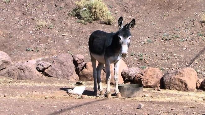 Commerce extérieur du Maroc : La Chine veut nos ânes !