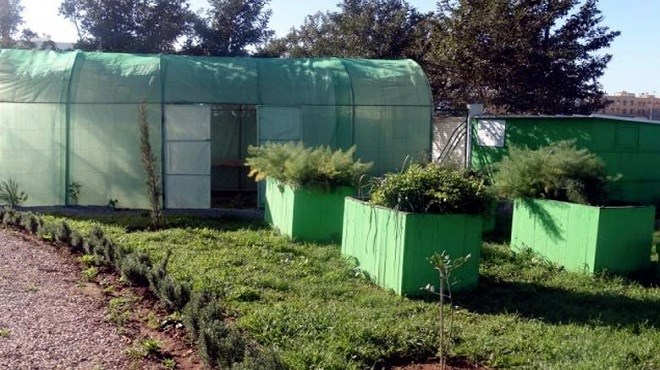Agriculture urbaine : Un espace expérimental à Médiouna