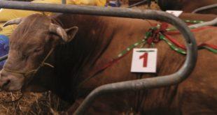 Viandes rouges : Une convention pour encadrer la filière au Maroc