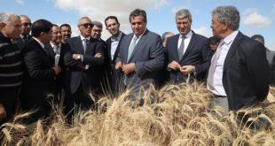 Maroc/Campagne 2016-2017 : Récolte record en perspective