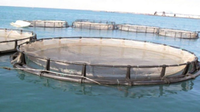 Aquaculture : Le Maroc a lancé 2 appels à manifestation d'intérêt