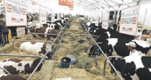 Première au Maroc : Un marché aux bestiaux verra le jour