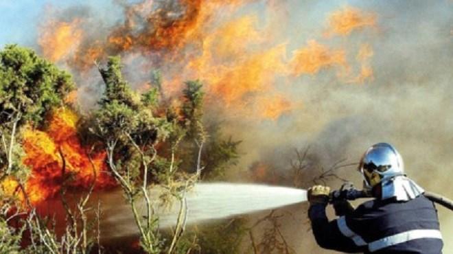 Feu de forêt à Tanger : La replantation pour juillet 2018