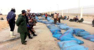 Dakhla : Alerte sur un trafic de poulpe