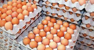 Affaire d'œufs contaminés/Maroc : Les consuméristes pas rassurés !
