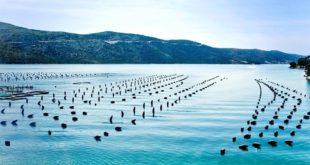 Aquaculture : Le potentiel marocain selon l'ADA