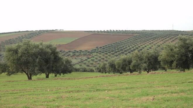 Maroc : Où en est le système de l'Agrégation agricole ?