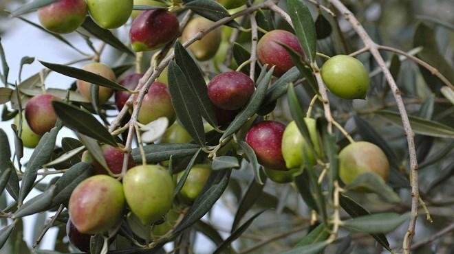 Maroc : Et de 4 pour le Salon de l'olivier !