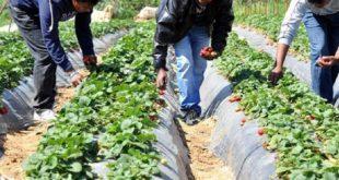 Conseil agricole : Le point avec le partenaire européen