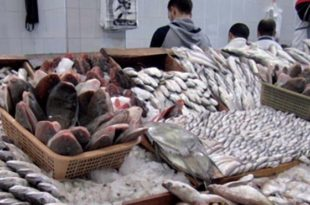Pêche maritime,Tan-Tan