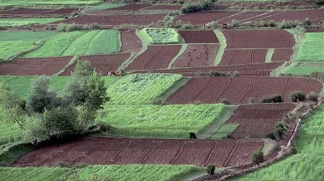 Doukkala : Les agriculteurs reprennent espoir !
