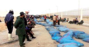 Dakhla : La pêche au poulpe reprend sur fond d'inquiétude !