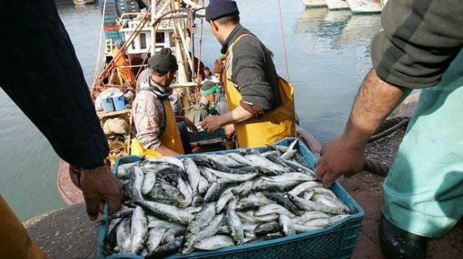 Pêche/Maroc : Les hauts et des bas des débarquements