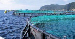 Aquaculture : L'ANDA lance deux appels à manifestation d'intérêt