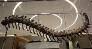 Affaire du dinosaure : Comment le fossile a-t-il quitté le Maroc ?