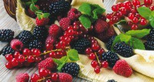Maroc-Larache : Le festival des Petits fruits rouges s'ouvre le 22 mars