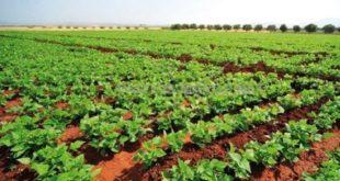 Semences des céréales : Une année catastrophe dans la région de Casa-Settat ?