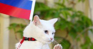 Coupe du monde 2018 : Un chat pronostiqueur officiel de la compétition