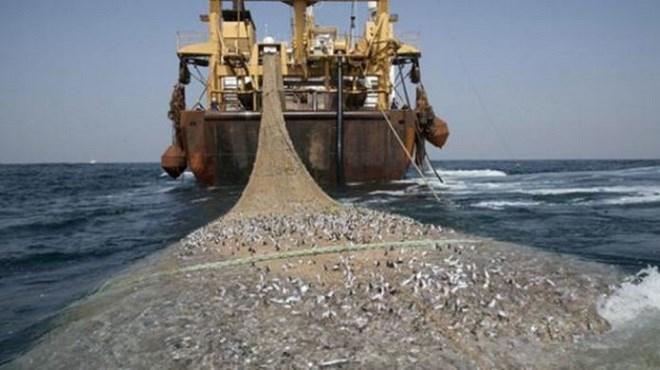 ONP : Les produits de la pêche en nette progression