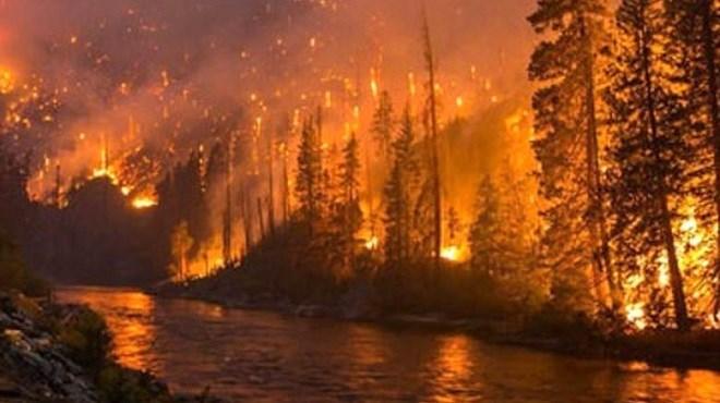 Australie : un incendie de forêt fait rage à Sydney