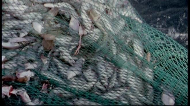 Pêche illicite : Le Maroc durcit la répression