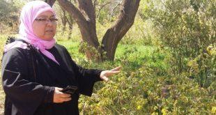 A Lakhmiss Dadès, le combat des femmes des roses…