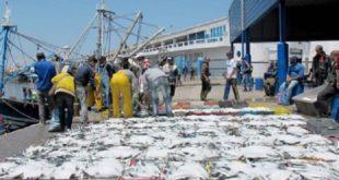 La Fédération des chambres des pêches maritimes attribue la hausse des prix aux spéculateurs
