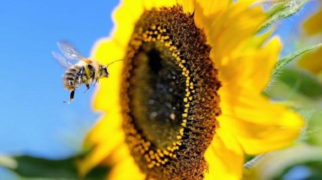 Forum : Services de pollinisation des abeilles