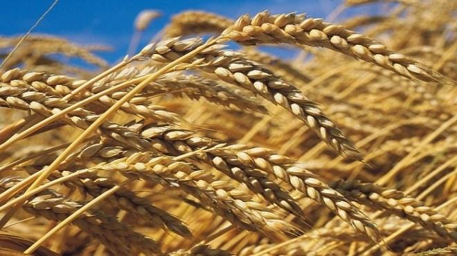 Céréales : Les mesures pour la campagne actuelle dévoilées