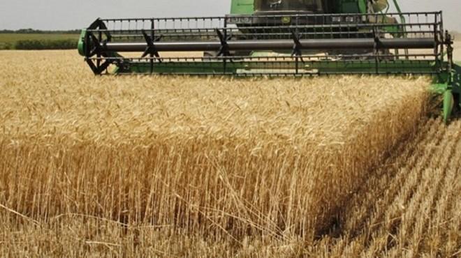 Céréales : Une production de plus de 100 millions de quintaux