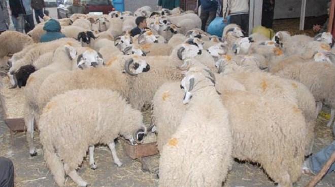 Aïd Al-Adha : Contrôle des médicaments vétérinaires