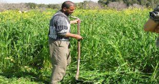 ORMVA-Gharb : Hausse tangible des subventions du FDA