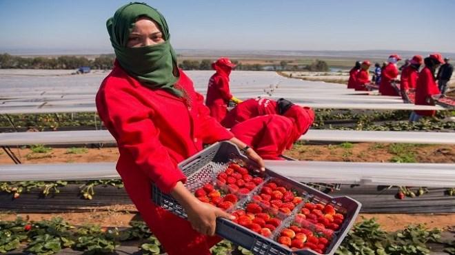 Saisonnières d'Huelva : Sévices sexuels dans les champs de fraises