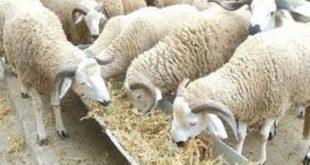 Aïd Al-Adha : Assurer une meilleure traçabilité des animaux