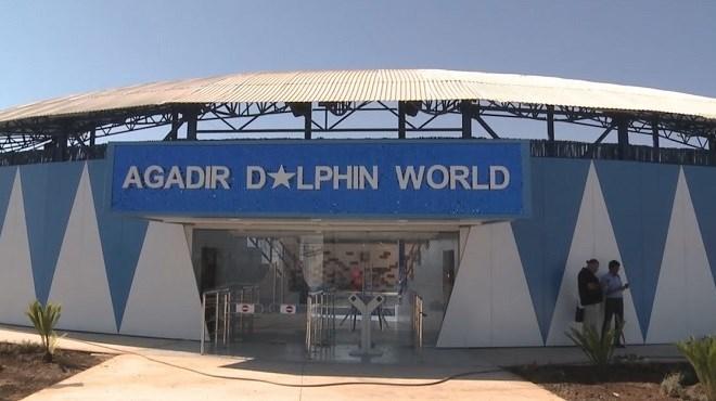 Agadir Dolphin World : Le delphinarium vient d'ouvrir ses portes (Vidéo)