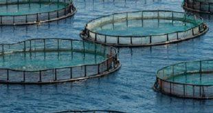 ANDA : Des chantiers phares autour de l'aquaculture