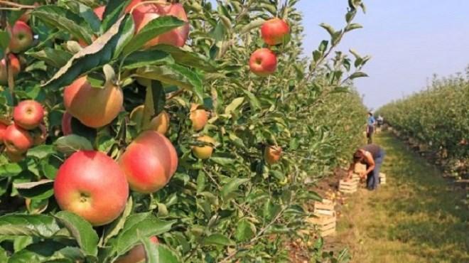 «Al Hoceima Manarat Al Moutawassit» : Où en sont les projets agricoles ?