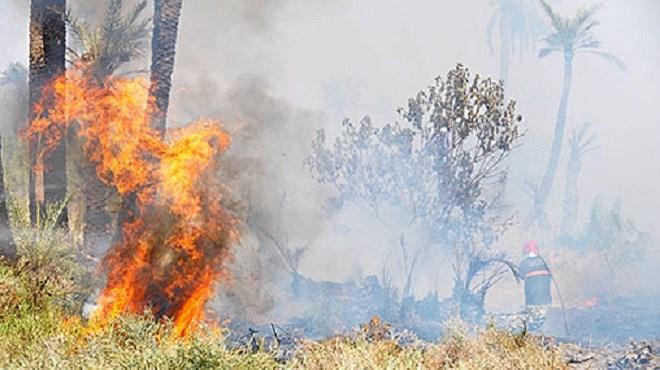 Un incendie dans la forêt d'Ourika totalement maîtrisé