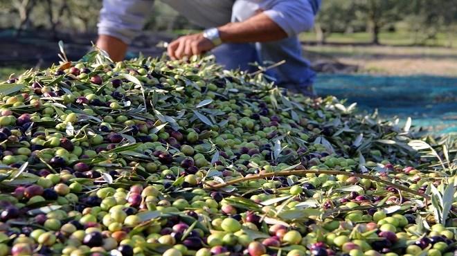 Oléiculture : Pour des projets agricoles économiquement viables