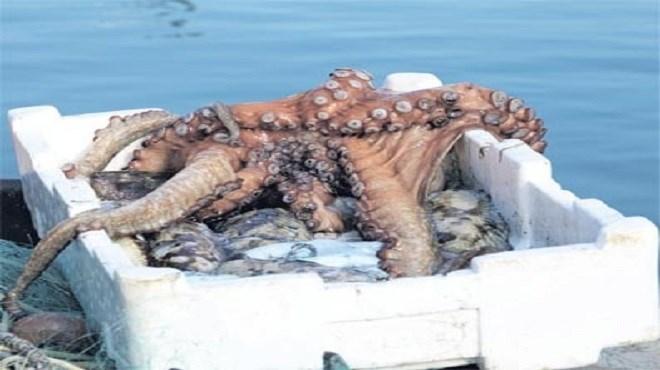 Pêche : La polémique sur les quotas revient !