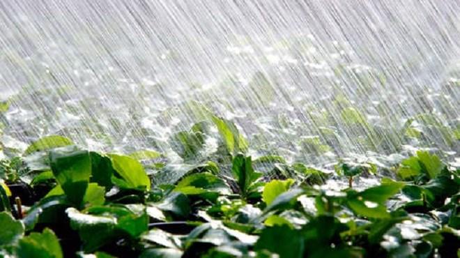 Couvert végétal des parcours : L'impact positif des récentes pluies